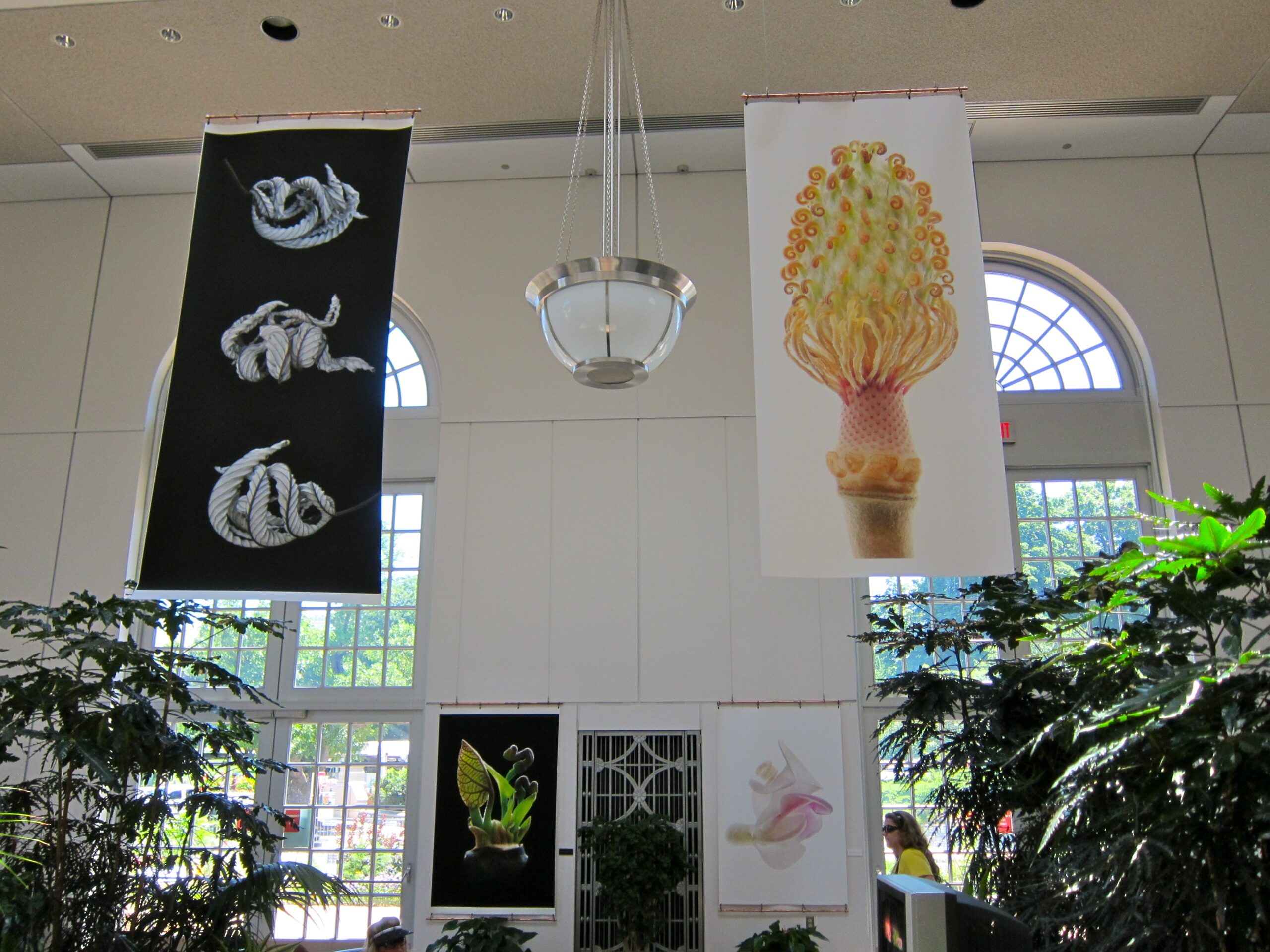 The United States Botanic Garden (USBG) Gallery